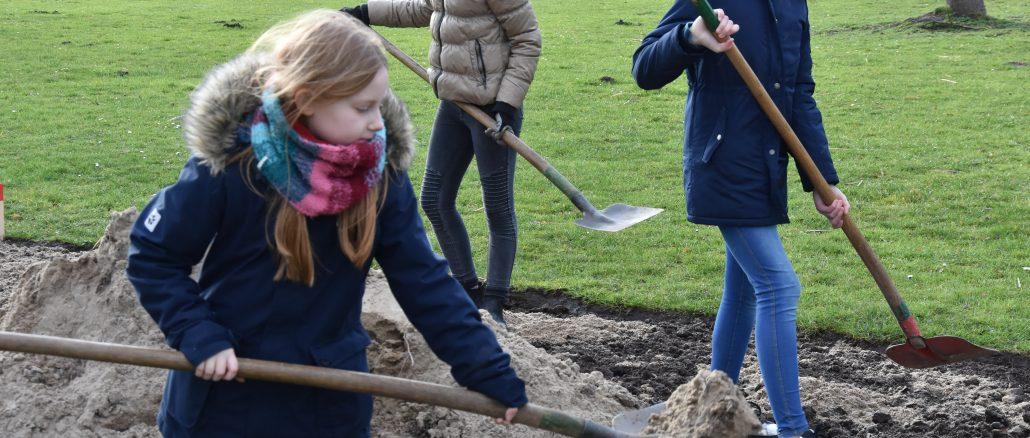 199780P 1030x438 - Schüler pflanzen Eiben und legen Wildblumenwiese an