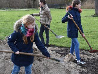 199780P 326x245 - Schüler pflanzen Eiben und legen Wildblumenwiese an